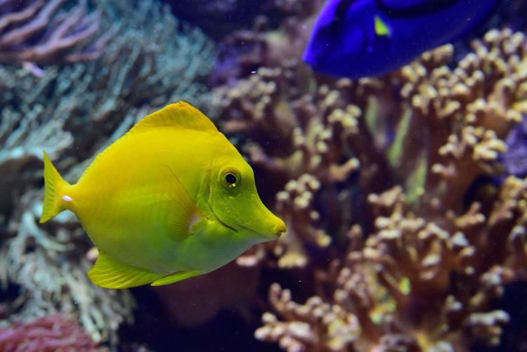 Fische Praxiskurs Zoo